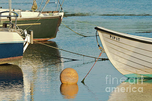 Buoy Pipit by Terri Waters