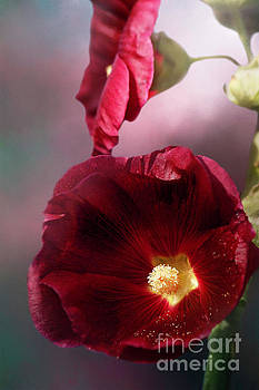 Burgundy Hollyhock by Cindi Ressler