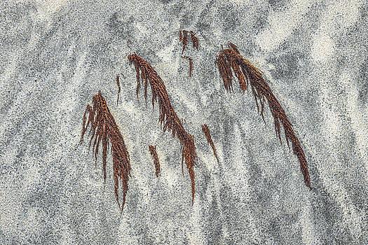 Buried Wings by Alexander Kunz