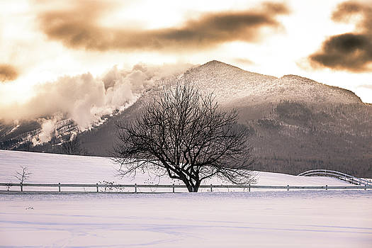 Burke and Tree Centered by Tim Kirchoff