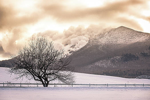 Burke Mountain and Apple Tree by Tim Kirchoff