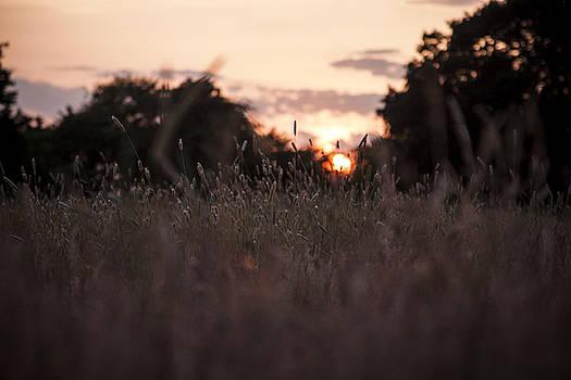 Stewart Scott - Burn in the heather