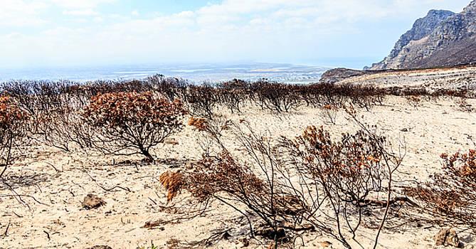 Burn landscape by Ben Osborne