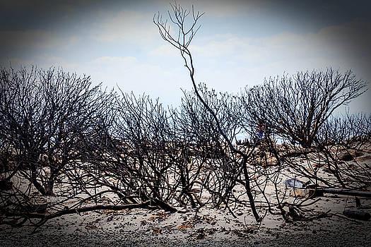 Burn tree by Ben Osborne