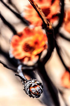 Burned Flower by Ben Osborne