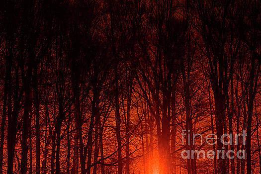 Burning Bush by Reynaldo Brigantty