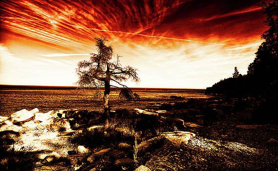 Venura Herath - Burning Sky