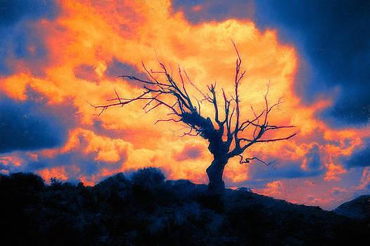 Burning Tree by Marco Scataglini