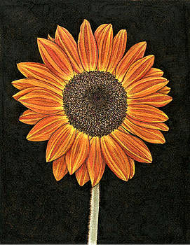 Burnt Orange Sunflower by Cate McCauley