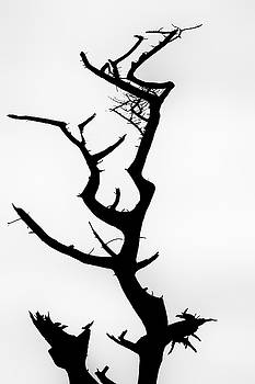 Burnt tree in silhouette by Russ Dixon