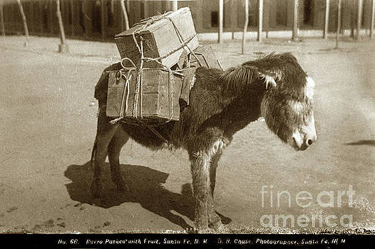 California Views Mr Pat Hathaway Archives - Burro Packed with Fruit, Santa Fe, New Mixco, D. B. Chase Photo