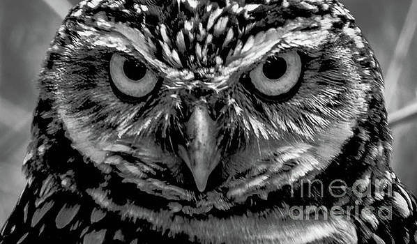Burrowing Owl Head Shot by Debra Kewley