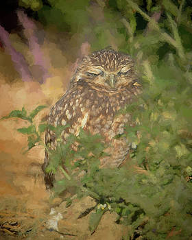 Burrowing Owl Sleeping by Pamela Rose Hawken