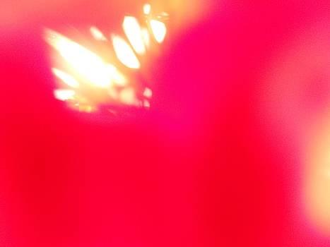 Burst of Light by Alexandra Masson