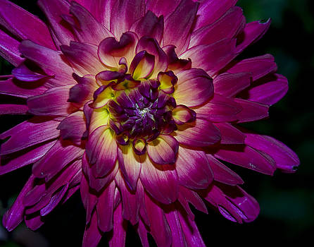 Burst of Purple by Mark Wiley