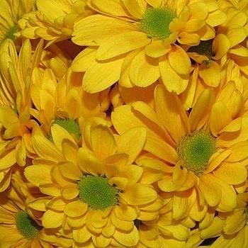 Burst Of Yellow by Tammy Finnegan