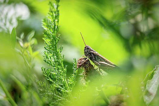 Bush cicket on grass by Libor Vrska