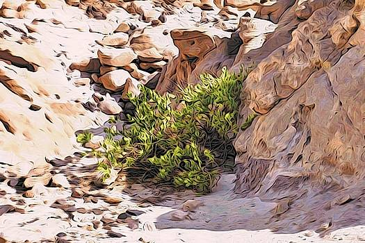 Bush in the Sinai desert by Alexandre Ivanov