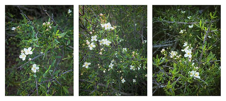 Bushrue Flower Collage by Alexander Kunz