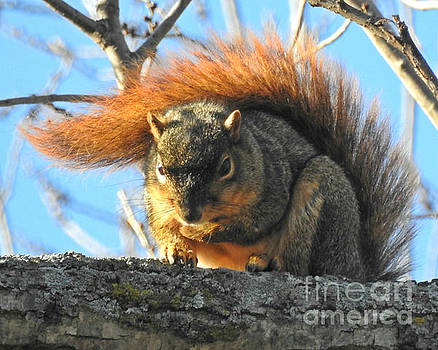 Bushy Tail by Kathy M Krause