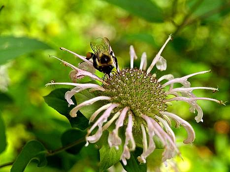 Busy as a Bee by Valeria Donaldson