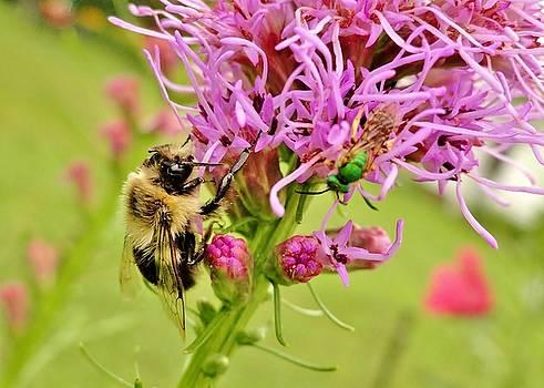 Busy Bee And The Little Helper by Elizabeth Hernandez