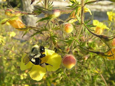 Busy Bee by Brenda Konitzer