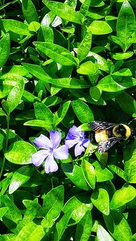 Busy Bee by Dustin Soph