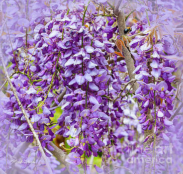 Michelle Constantine - Busy Bee in Wisteria Flowers