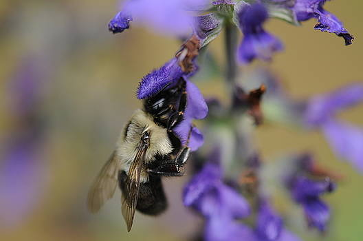 Busy Bee by Jana Goode