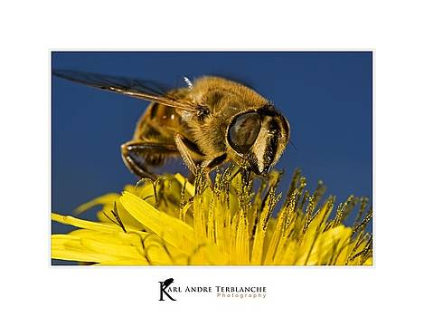 Busy Bee by Karl Terblanche