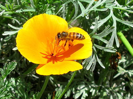 Busy Bee by PJ  Cloud