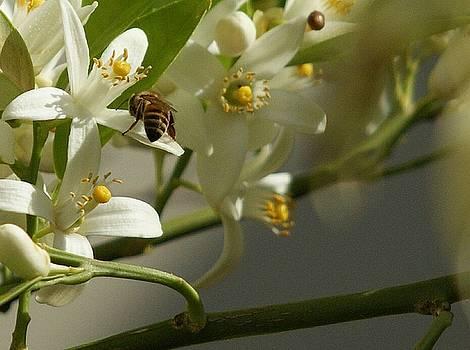 Busy Bee by Rosalin Moss