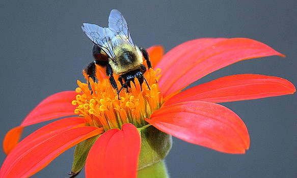 Rosanne Jordan - Busy Bee