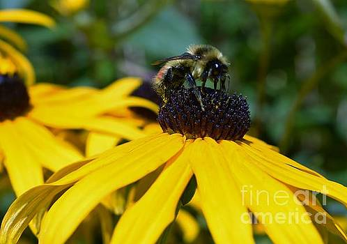 Busy Bee by Sharon Patterson