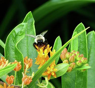 Busy Bee by Susan Ferency