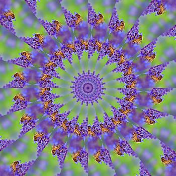 Nikolyn McDonald - Busy Bees - Mandala