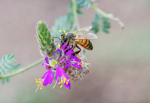 Busy buzzing Bee by Ruth Jolly