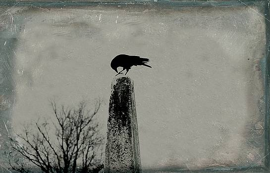 Busy Crow On Old Obelisk  by Gothicrow Images