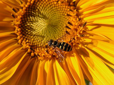 Busy Little Bee by Charlotte Morgan