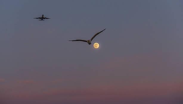 Alex Lapidus - Busy Skies