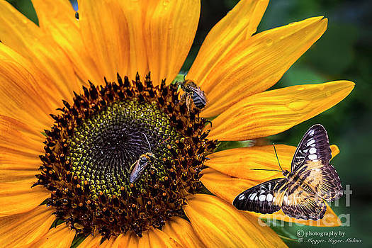 Busy Sunflower by Maggie Magee Molino