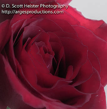 But a Rose by Scott Heister