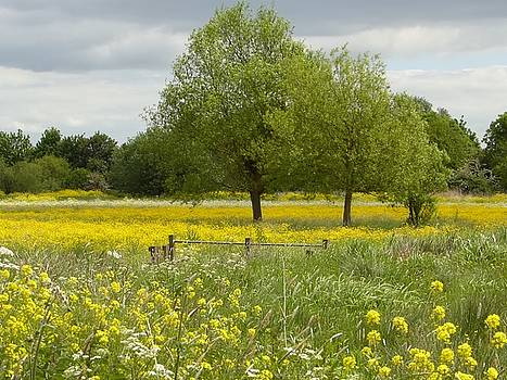 Buttercup meadows by Sarah Fowle
