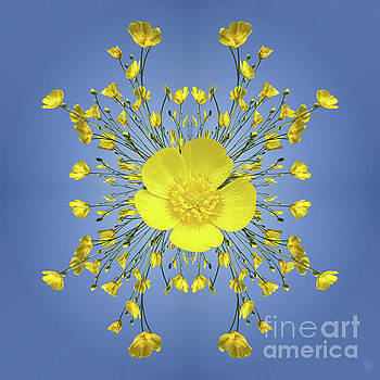 Buttercups In The Round by Neil Finnemore