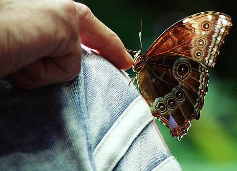 Butterfingers by Ansate Jones