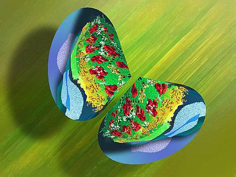Butterflies 5 by Ricardo Szekely