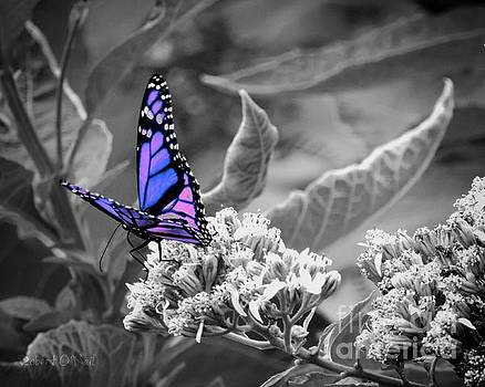 Butterflies Are Free To Fly 002 by Robert ONeil