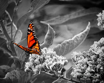 Butterflies Are Free To Fly by Robert ONeil