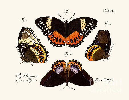 Butterflies by German School